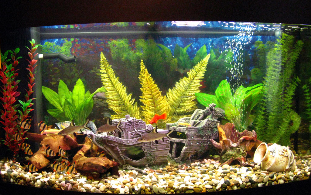 Aquarium Decorations with Stunning Top Ideas
