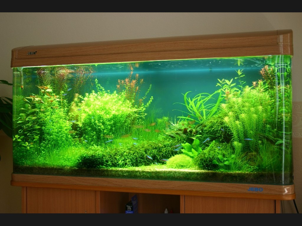 Big acrylic aquarium