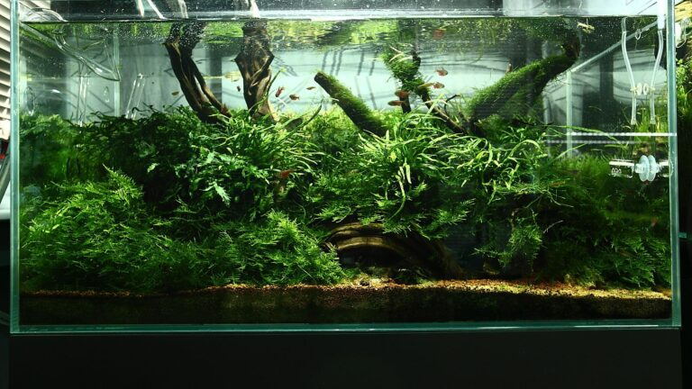 Acrylic Aquarium with Green Silica
