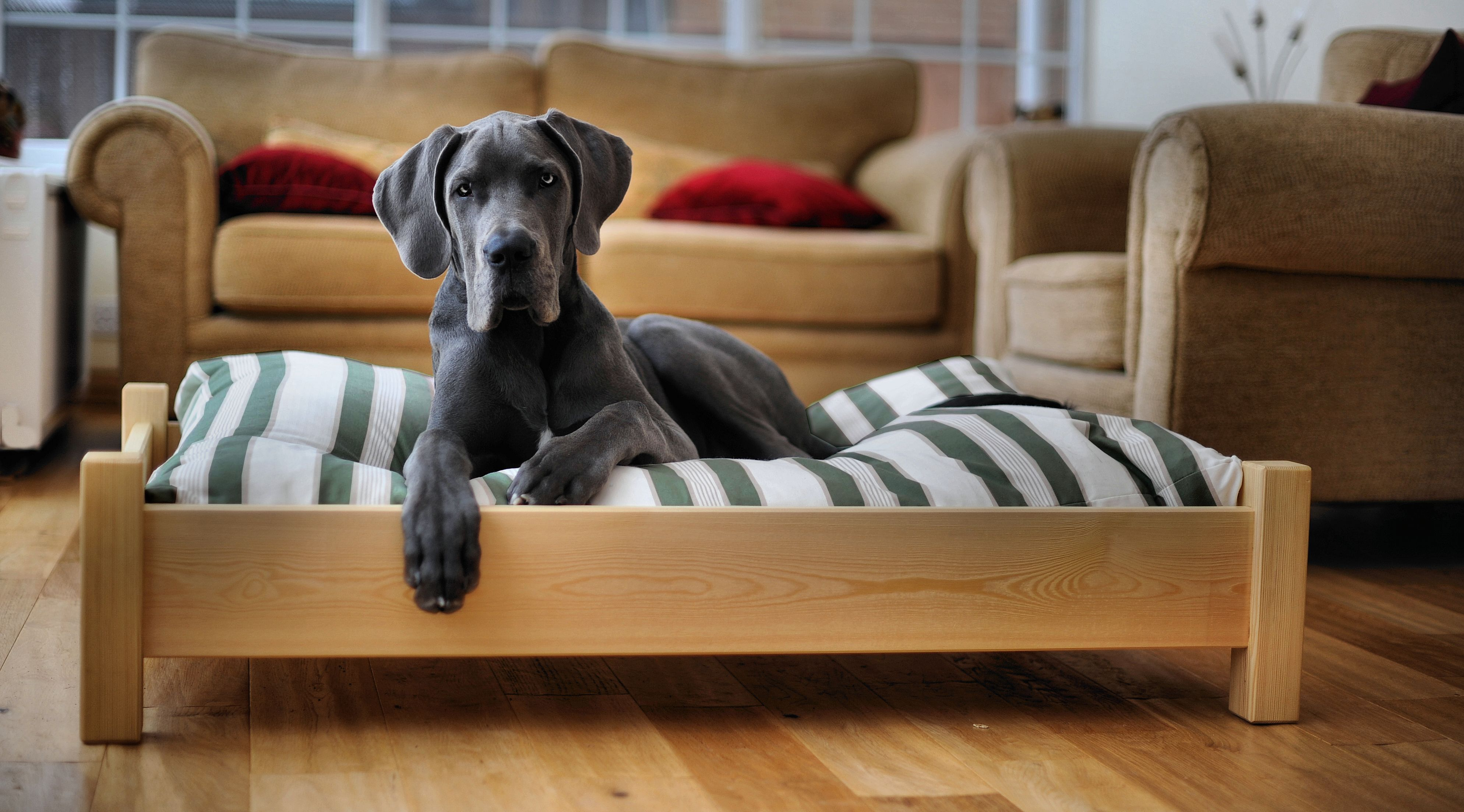 : Elevated Dog Bed