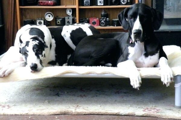 Kuranda Dog Beds for Comfortable Sleeping