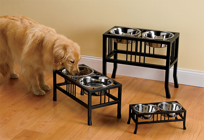 Different Raised Dog Bowls for Your Favorite Dog